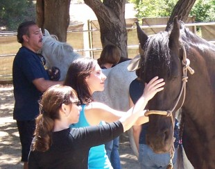 Equine Assisted Healing for Trauma