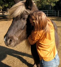 Equine Assisted Therapy for Families