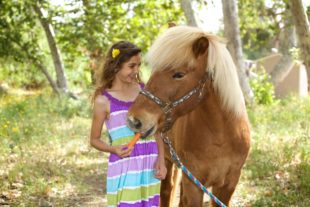 Girl giving her pony a carrot