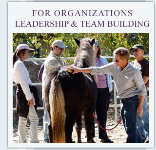 For Organizations