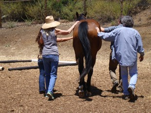 Equine Assisted Learning Workshops