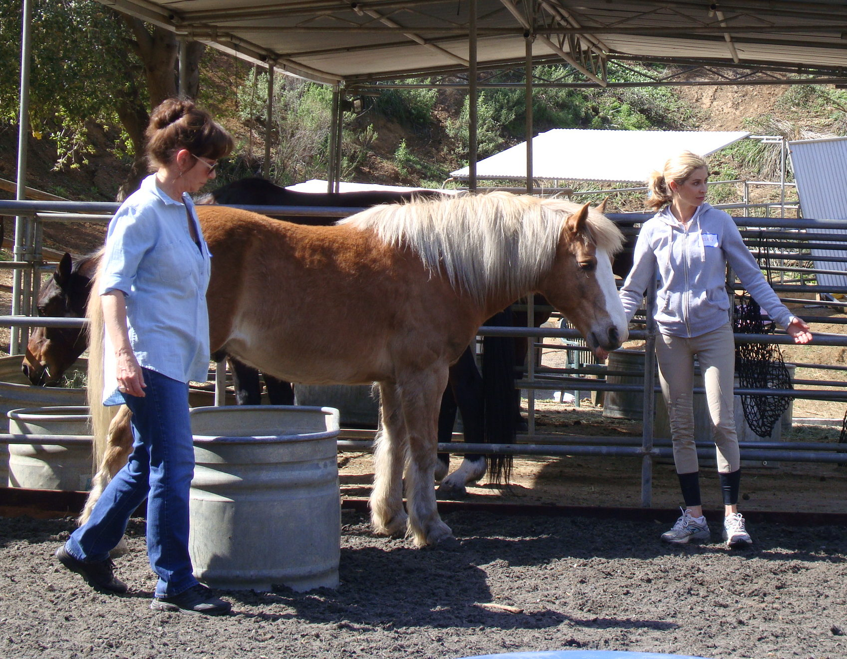 Common Feeds for Horses - thesprucepets.com